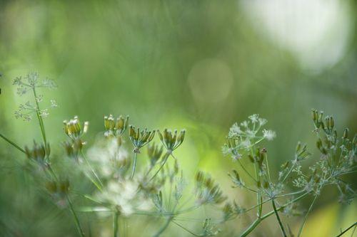090615_GardenMagic_001