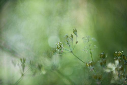 090615_GardenMagic_002