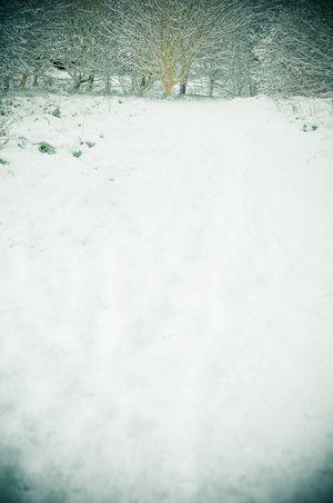 100106_snow_001-2