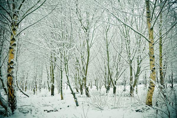 100106_snow_002-2